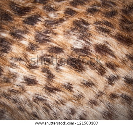 Close up fur texture to background - stock photo
