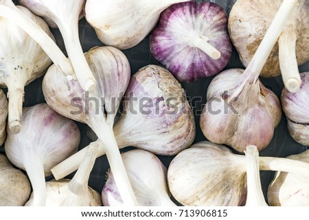 Close-up Garlic bulbs and garlic cloves is a top view