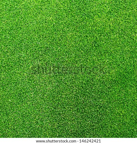 Close-up golf grass from golf course - stock photo
