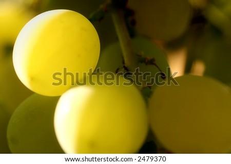 close-up grapes - stock photo