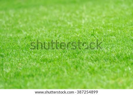 Close-up green grass texture - stock photo