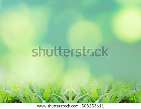 Close up green grass with blur park background,Spring and summer concept.