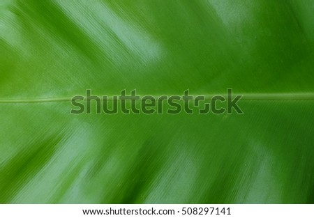 Close up green leaf for background. Green day and Save the earth concept.