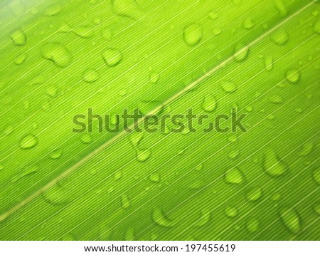 close-up green leaf with water drops - stock photo