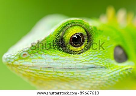 Close up green lizard eye - stock photo
