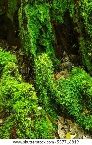 close up green moss in the forest