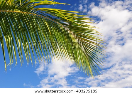 Close up Green palm tree on blue sky background - stock photo