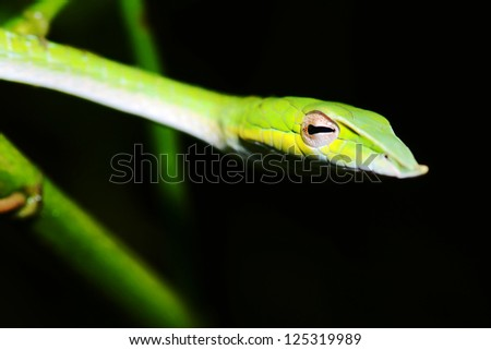 Close-Up Green snake - stock photo