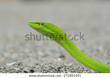 close up green snake head - stock photo