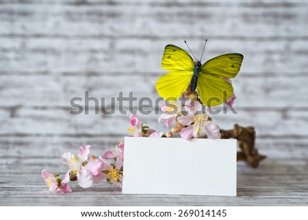 Close up Greeting Card with Copy Space In Front of Attractive Orchid Flowers with Yellow Green Butterfly Insect Resting. - stock photo