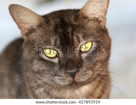 Close up grey cat looks at camera - stock photo