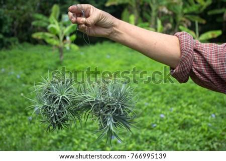 Hand Watering Carrot Vegetable Garden Stock Photo 457428802 ...
