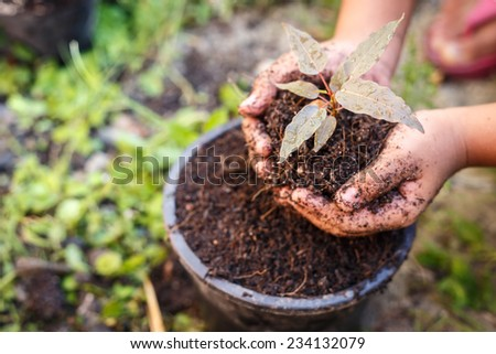 Close up Hand of children holding plant and soil - stock photo