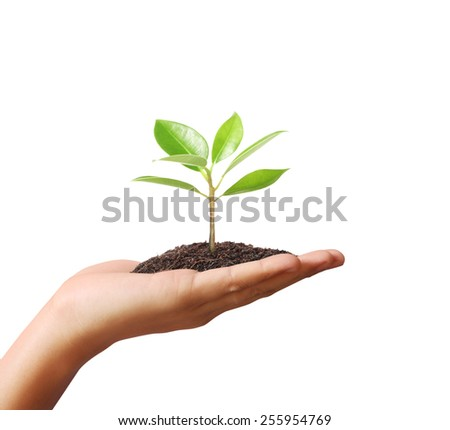 Close up hands holding plant