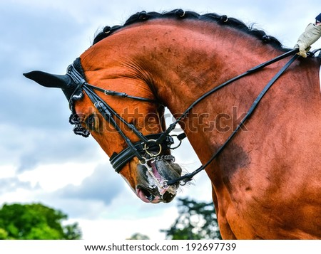 close up head of dressage horse and rider on dressage competition - stock photo