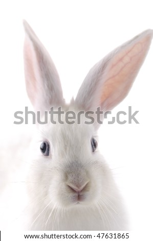 Close up head of rabbit - stock photo