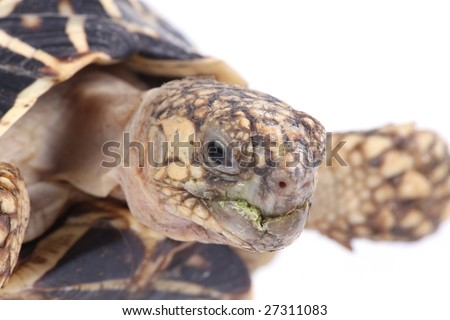close up head shot of a turtle