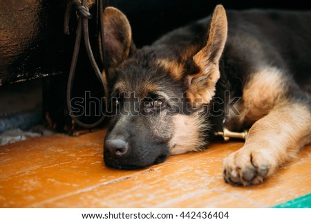 stock-photo-close-up-head-young-german-s