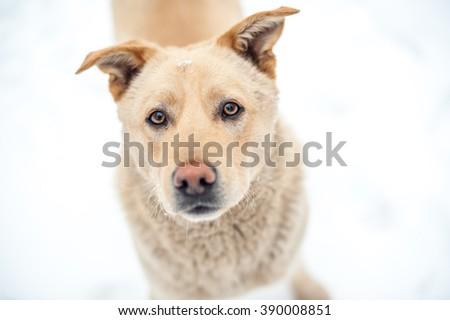 Close-up homless dog portrait - stock photo