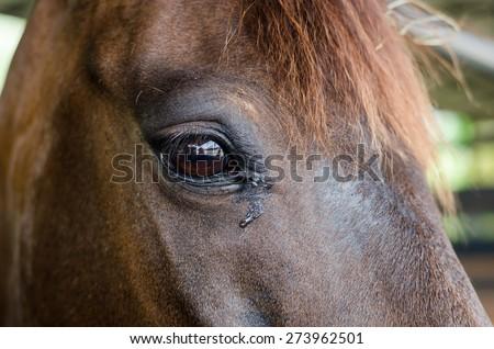 Close up horse eye. - stock photo