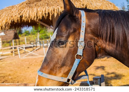 Close up Horses in the field - stock photo