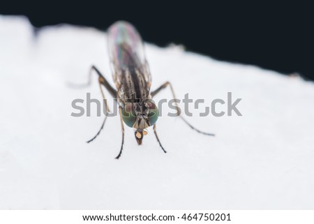 Close up Housefly