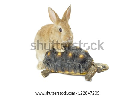 Close-up image of a cute bunny and turtle isolated in a white surface - stock photo