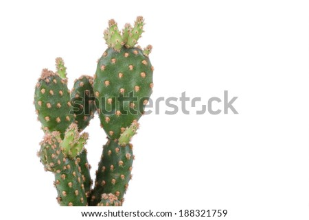 Close up Image of a Decorative Cactus Plant Isolated on a White Background - stock photo