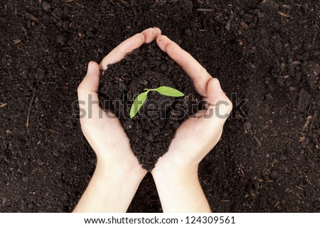 Close-up image of a human's hand holding small plants with soil - stock photo