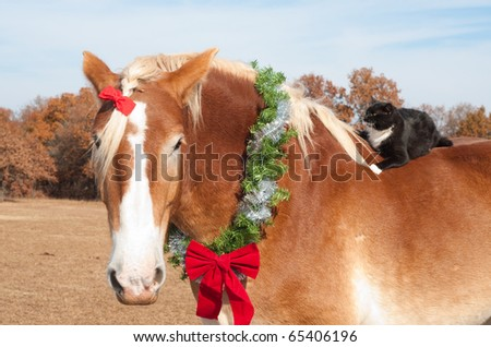 Close up image of a large Belgian Draft horse wearing a Christmas wreath around his neck, with his tiny kitty cat friend riding on his back - stock photo