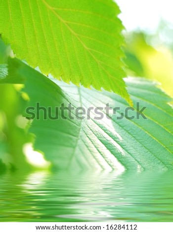 Close-up image of beautiful green summer leafs in the water - stock photo