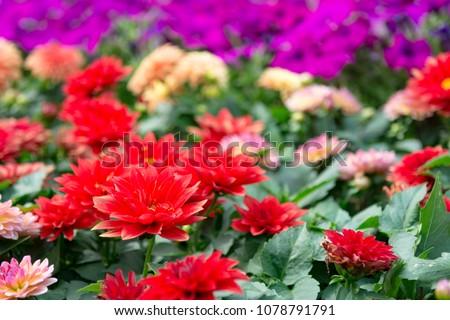 stock-photo-close-up-image-of-beautiful-
