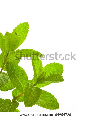 Close up image of Common Mint over white background. - stock photo