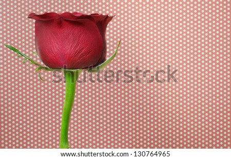 Close up image of dark red rose.Extreme close-up with shallow dof. - stock photo