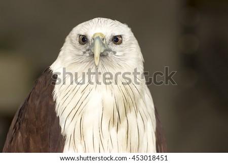 close up image of eagle - stock photo