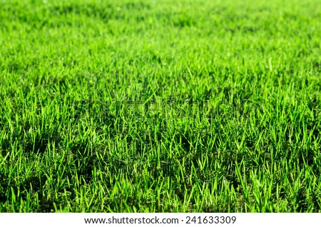 Close-up image of fresh spring green grass - stock photo