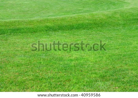 Close up image of fresh spring green grass