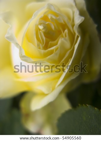close up image of garden flowers in summer time taken in june england - stock photo