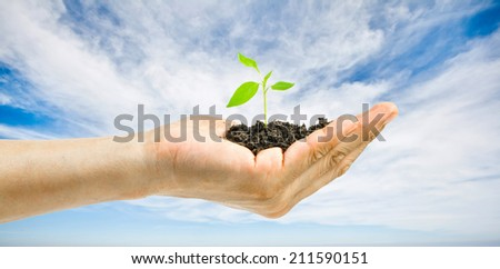 Close up image of human hands holding sprout - stock photo