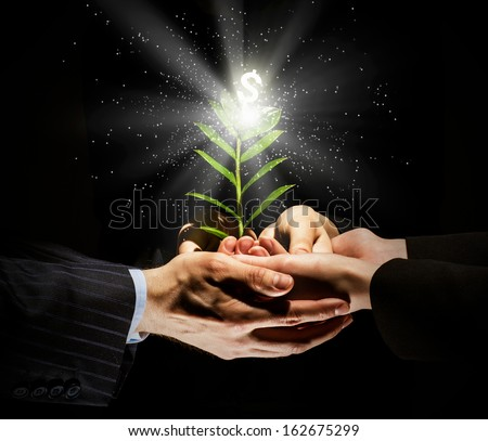 Close up image of human hands holding sprout of money tree - stock photo