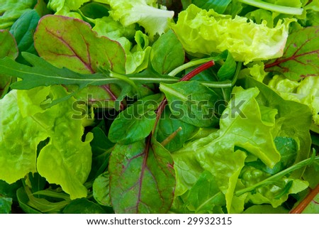 Close up image of mixed salad greens - stock photo