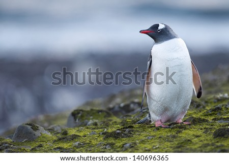 Close up image of penguin - stock photo