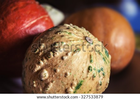 Close up image of pumpkins. Autumn harvest bright decorative pumpkins. Shallow DOF - stock photo