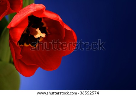 Close-up image of red flower blooming - stock photo