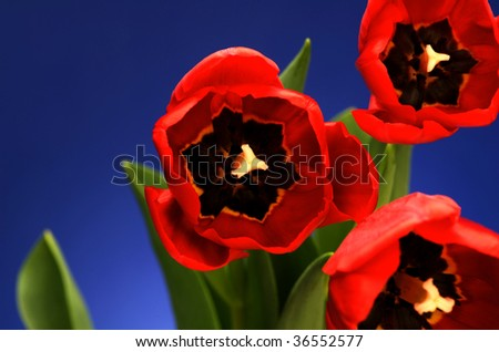 Close-up image of red flowers blooming - stock photo