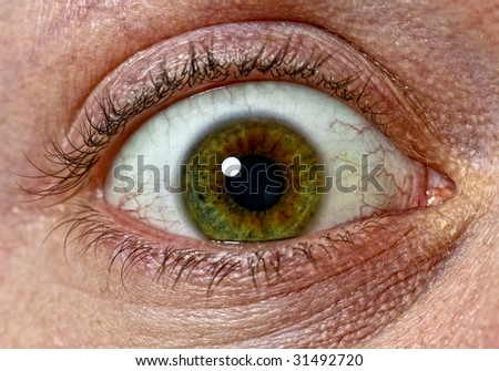 close up image of scary green eys background - stock photo