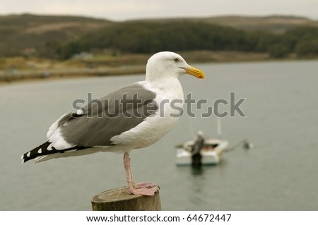 Close up image of seagull - stock photo
