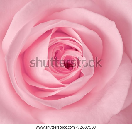 Close up image of single pink rose