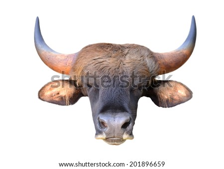 close up image of the gaur head isolated