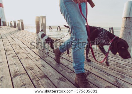 Close up image of woman legs during dog walk. Young female followed by two dogs. - stock photo